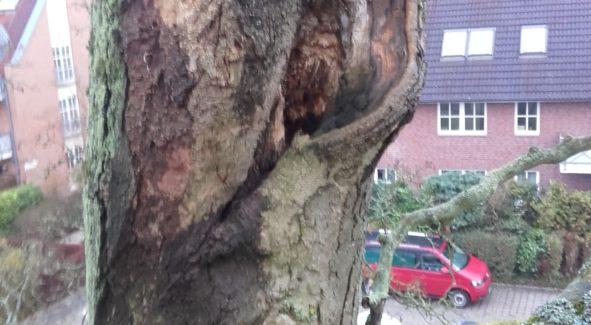Baumverwaltung